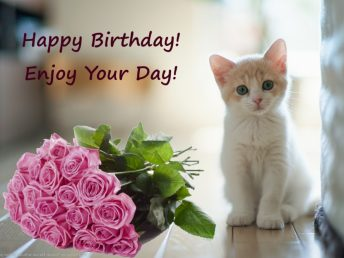 Happy Birthday with kitten and flowers (pink-red roses)